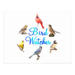 Vigilante de pájaro tarjetas postales