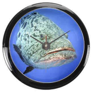 Vigile el tiempo - reloj de la perca relojes acuario