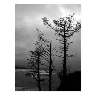 Vigilia de tres árboles en la postal de la costa