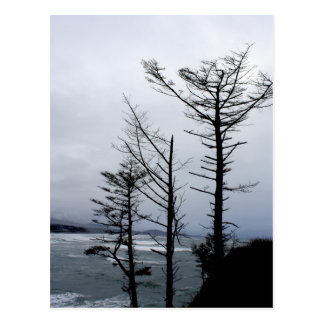 Vigilia de tres árboles en la postal de la costa I