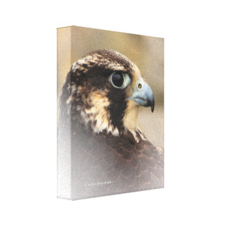 Vignetted Profile of a Peregrine Falcon Canvas Print