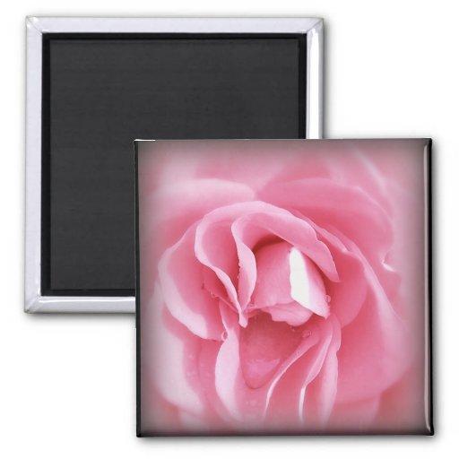 Vignetted Rose magnet