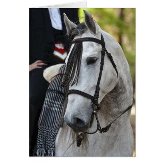 Vikingo Andalusian Stallion greeting card blank