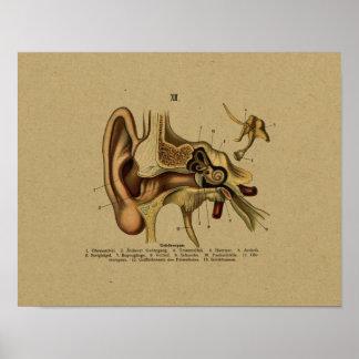 Vinatge German Anatomy Ear Print