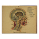 Vinatge German Anatomy Print Head Neck