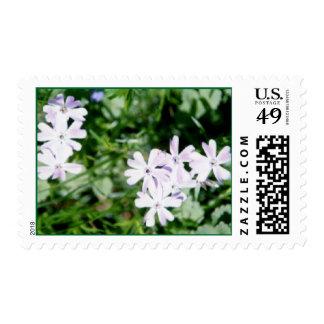 vinca postage stamps
