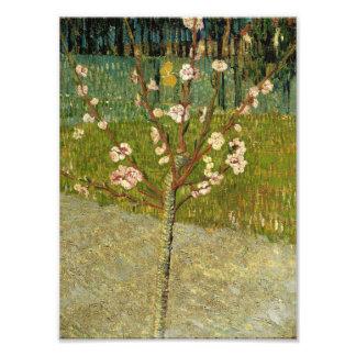 Vincent van Gogh - Almond tree in blossom Photo Print