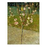 Vincent van Gogh - Almond tree in blossom Postcards
