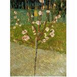 Vincent van Gogh - árbol de almendra en flor Escultura Fotográfica