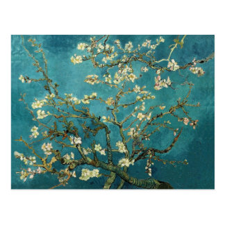 Vincent Van Gogh - Blossoming Almond Tree Blossoms Postcards