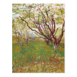Vincent Van Gogh -  Cherry tree Post Card