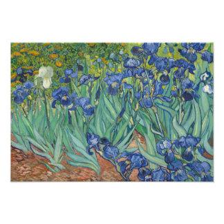 Vincent van Gogh - iris Cojinete