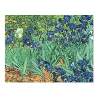 Vincent van Gogh | Irises, 1889 Postcard