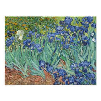 Vincent van Gogh - Irises Photo Print