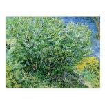Vincent Van Gogh - Lilacs Post Card