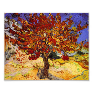 Vincent Van Gogh Mulberry Tree Fine Art Painting Photo Print