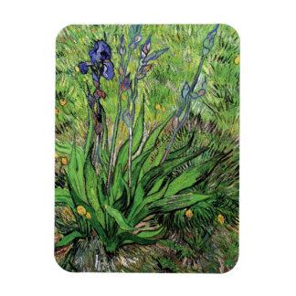 Vincent Van Gogh - The Iris Nature Lover Fine Art Magnet