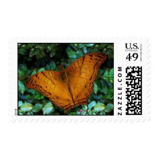 Vindula Cruiser Butterfly Stamp