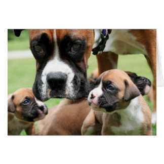 Vindy and Pups - Photo 09 Card