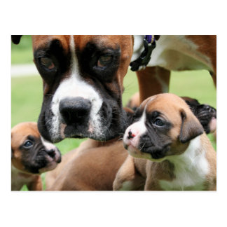 Vindy and Pups - Photo 09 Postcard