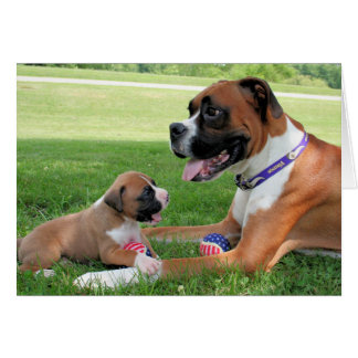 Vindy and Pups - Photo 95 Greeting Cards