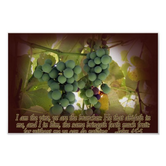 Vine and Branches John 15:5 Poster Print