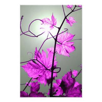 Vine Branch Photo Art