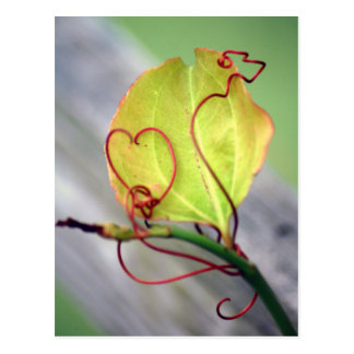 Vine Heart Postcard