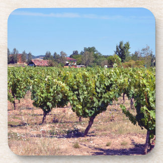 Vine in the Gaillac region in France Coaster
