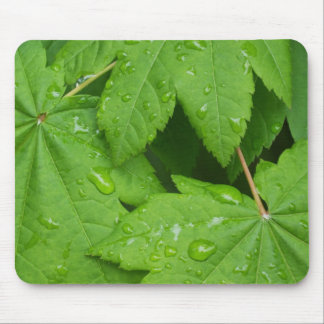 Vine Maple leaves Mouse Pad