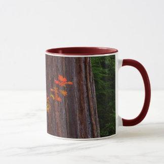 Vine Maple & Western Red Cedar Mug
