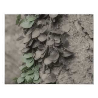 Vine On Tree Partial Color Nature Poster