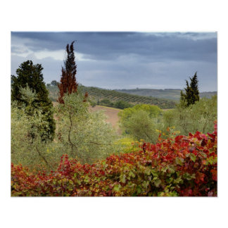 Viñedo cerca de Montalcino, Toscana, Italia Impresiones