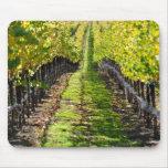 Viñedo de la uva de Napa Valley California Tapete De Ratones