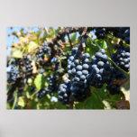 Viñedo de las uvas poster