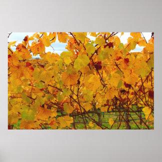 Viñedo del país vinícola de Napa Valley Póster
