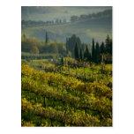 Viñedo, Toscana, Italia Postales