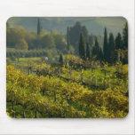 Viñedo, Toscana, Italia Tapetes De Raton