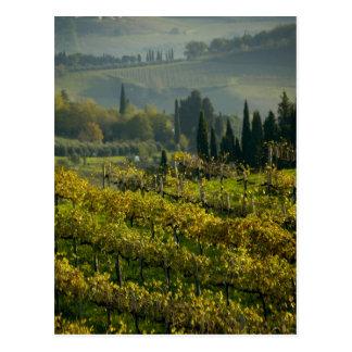 Viñedo, Toscana, Italia Tarjetas Postales