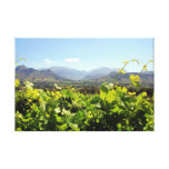 Viñedo y vino de Suráfrica Impresiones En Lona Estiradas