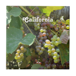 Viñedos de California Azulejo Cuadrado Pequeño
