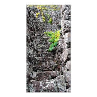 Viñedos en las islas de Azores Tarjeta Fotográfica