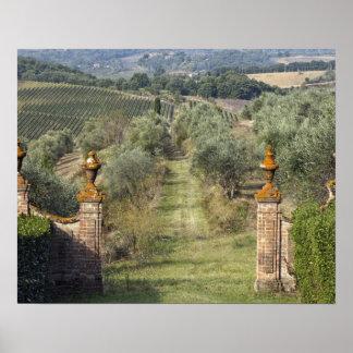 Viñedos, Toscana, Italia Poster