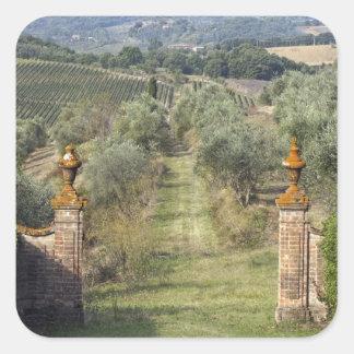 Viñedos, Toscana, Italia Calcomanias Cuadradas