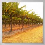 Vines Aligned Poster