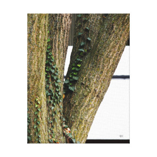 Vines Stretched Canvas Print