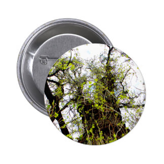 Vines crawling pinback buttons