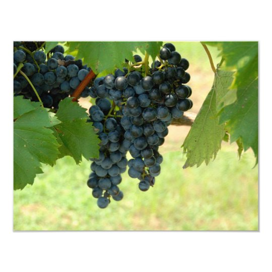 Vineyard Grapes Card