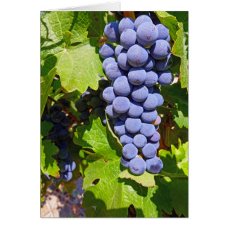 Vineyard Grapes Card