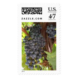 Vineyard Grapes Postage